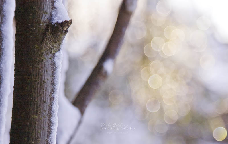 In Search of Snow Bokeh