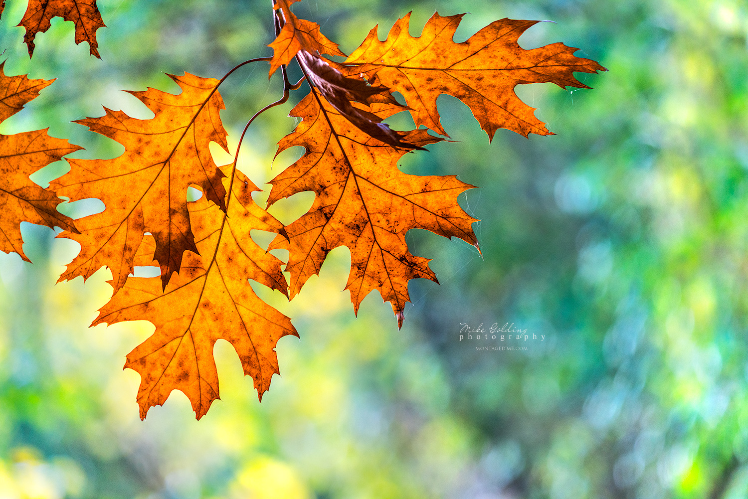 The Story of Autumn